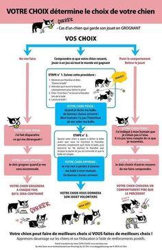Comment le comportement humain influe sur celui de son chien ?