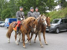 """Historical re-enactment of early 20th century cavalry use of the Finnhorse. 1922 Ratsumieskilta (""""Horseman Guild"""") uniform."""