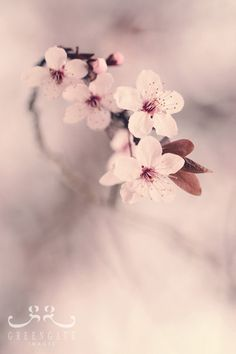 Plum Blossoms - Photo Print, flower photography, spring, botanical, pink