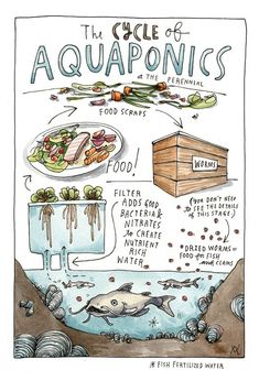 An illustrated explanation of how aquaponics work. Illustration by Wendy MacNaughton Sustainable Food, Sustainable Design, Clam Fish, Community Places, Book Of Changes, California Restaurants, Fish Farming, Restaurant Design, Restaurant Restaurant