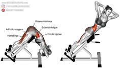Twisting hyperextension. A compound exercise. Target muscles: Erector Spinae, Hamstrings, and Internal and External Obliques. Synergistic muscles: Gluteus Maximus and Adductor Magnus.
