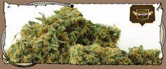 Order Real #Weed Online - Buy #WeedStrains #GREENCRACK Now!