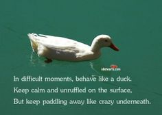 A duck quote a day keeps the doctor away