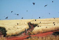 art movies dreams u Akira Kurosawa Van Gogh wheatfield with crows Famous Movie Scenes, Famous Movies, Renoir, Kurosawa Akira, Lawrence Alma Tadema, Alfred Hitchcock, Movie Shots, Michelangelo Antonioni, Cinema Movies