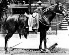 "General Philip Sheridan's horse Rienzi, aka Winchester, a Morgan. Depicted in the famous poem ""Sheridan's Ride""."