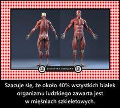 Szacuje się, że około 40% wszystkich białek organizmu