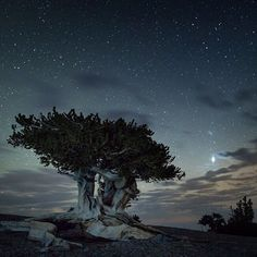 As summer winds down, fall is the perfect time to visit #GreatBasin National Park in #Nevada. Experience the solitude of the desert, 5,000-year-old #bristlecone pine trees and the darkest of night skies. #NationalPark Service photo.