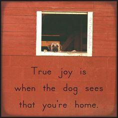 True Joy. If only I could find a guy who got Half as excited as my dog gets.... I'd be one lucky girl.