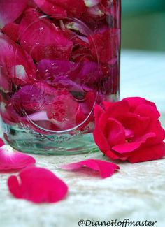 Making homemade rose water facial toner is a great way to use fresh rose petals. Learn how to make rose water and stop letting rose petals go to waste! Uses For Rose Water, Homemade Rose Water, Sugar Scrub Homemade, Homemade Beauty, Diy Beauty, What Is Rose, Fresh Rose Petals, How To Make Rose, Linen Spray