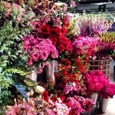 At the garden centre #longacres in #surrey such a stunning array of flowers. #sunandmoonholistic