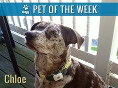 """Congratulations to Chloe and Lorial for winning PET OF THE WEEK! Chloe loves her Tagg so much they call her the """"TaggOnista""""."""