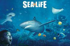 SEA LIFE Minnesota Aquarium at the Mall of America $24 outside Minneapolis - TripAdvisor