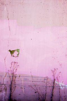 pink afternoon