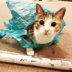 Wrapping  kitty = smiles  #catsofinstagram #weeklyfluff #playsmartlivewell #wales