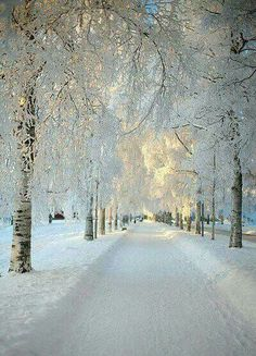 Snow Lane. Kiruna, Sweden.