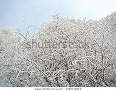 Park Winter Landscape Frozen White Fairy Stock Photo (Edit Now) 1582479919 Winter Landscape, Fairy Tales, Photo Editing, Royalty Free Stock Photos, Frozen, Park, Illustration, Artist, Photography