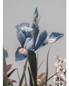 Beautiful muted iris flowers. From the Vita Collection mood board . # blues #iris #sleepwear