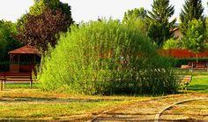 Živé stavby z vrby - vrbové stavby - Proutěné ploty a rohože na plot   Vrbové stavby - Naše realizace Living Willow, Country Roads, Garden, Garten, Lawn And Garden, Gardens, Gardening, Outdoor, Yard