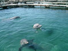 Swimming with the dolphins at Xcaret in Cancún--my dolphin's name was Caina.  :)