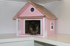 The luxurious cattery at Alcala Pet Care     Check into the different kinds of animal care tips that pet owners everywhere are usingwhen it comes to their pets.
