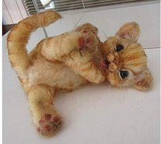 Andy, playful kitty By Mikki Klug - Bear Pile