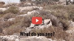 Can you spot The IDF soldiers?
