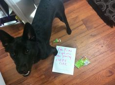 @Lauren Liptack found your dog on dogshaming.com hahahaha
