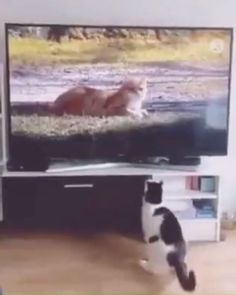 The cat : Why did it disappear so quickly? Funny Animal Memes, Funny Animal Videos, Funny Animal Pictures, Cute Funny Animals, Cute Baby Animals, Cat Memes, Animals And Pets, Cute Cats, Wild Animals