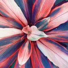 Inspired: Crispy Bikinis 2014 FAITH // flower, art, color