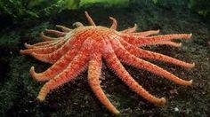 Resultado de imagen para starfish