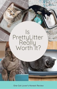 food_drink - I Hate Cat Litter Here's Why PrettyLitter is Amazing Hate Cats, I Love Cats, Halter Tops, Cat Health, Cute Baby Animals, Cats And Kittens, Fur Babies, Cute Dogs, Cat Lovers