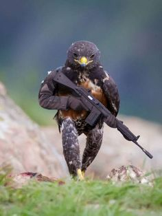 This Hawk Photoshop Battle is Epic Rare Animals, Animals And Pets, Funny Animals, Beautiful Birds, Animals Beautiful, Photoshopped Animals, Funny Birds, Funny Animal Pictures, Animal Memes