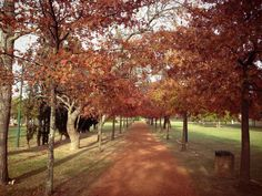 Our beautiful market grounds in autumn: Southey's Vines, Main Rd, Somerset West. Somerset West, Brown Shades, Craft Markets, Country Crafts, Mountain Range, Cape Town, Good Times, South Africa, Vines