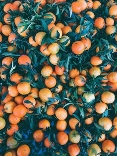citrus, done in orange Berry, Orange Aesthetic, Aesthetic Pastel, Fruits And Veggies, Food Styling, Color Inspiration, Food Photography, Organic, How To Make
