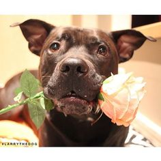 """Showing people I care doesn't take much effort at all. The little things count!"" 