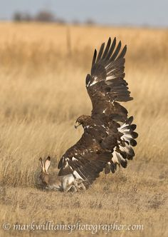 """""""Natural Drama"""" by Mark Williams 