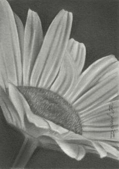 Pencil Drawings Of Flowers | Flowers Pencil Sketches