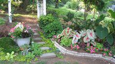 Side yard, light sun, dry shade. Good drainage.