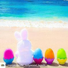 Credit to @margaritaville_hollywood_beach : Happy #Easter Sunday! Hop on over to Jimmy Buffett's Margaritaville for our Eggcellent Breakfast Buffet. The Easter bunny will be visiting from 9am-12pm.  #hollywoodtapfl #hollywoodfl #hollywoodflorida #hollywoodbeach #downtownhollywood #miami #fortlauderdale #ftlauderdale #aventura #dania #daniabeach #hallandale #hallandalebeach #davie #pembrokepines #miramar @hollywoodtapfl (at Margaritaville Hollywood Beach Resort)