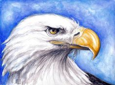American Bald Eagle by Evey Studios