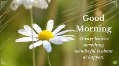 Uplifting Good Morning Greetings to Start your Day on the Bright Side Good Morning Inspirational Quotes, Good Morning Quotes, Good Morning All, On The Bright Side, Always Believe, Daisies, Make You Feel, Helping Others, Quote Of The Day
