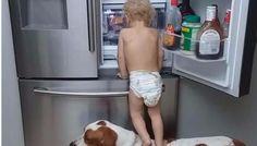 El ingenio de un bebé con el perro, su mascota, se convirtieron en viral: Casi 100 mil de reproducciones para la aventura de estos dos…