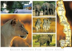 Card showing scenes from the Kruger National Park. Sent to Russia.