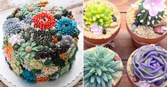 Succulent Cakes Are The New Dessert Trend We're Totally Stuck On | HuffPost