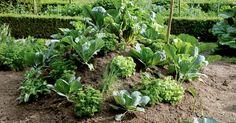 Ein Hügelbeet besteht aus mehreren Schichten organischen Materials. Gemüse lässt sich hier gut kultivieren, da bei der Zersetzung Wärme frei wird, die das Pflanzenwachstum fördert. So können Sie sich ein eigenes Hügelbeet anlegen.