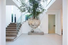 suspended tree in the middle of this residence // 631 Mansfield designed by Amit Apel Design