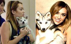 Floyd, o cachorro fofo de Miley Cyrus.