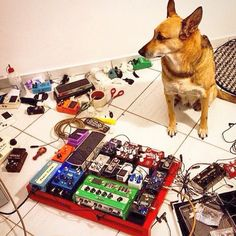 Instagram user @toneculture featured this picture of @guibrandoguitar's dog enjoying being a part of the action. #dogs #dogsandpedals #pedalboard
