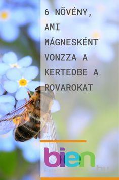 Kertészkedés- kattints a linkre és olvasd el a teljes cikket Insects, Bee, Honey Bees, Bees