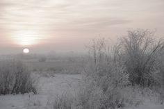 In Silent snow. Alberta Nov. 2012